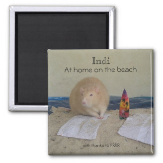Indi, At home on the beach, with thanks to... Square Magnet