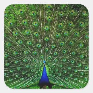 India Blue Peacock Square Sticker