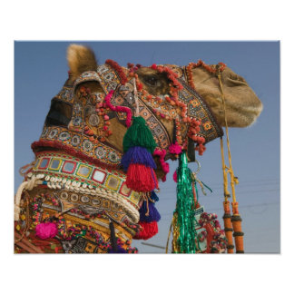 INDIA, Rajasthan, Pushkar: PUSHKAR CAMEL FAIR, Poster
