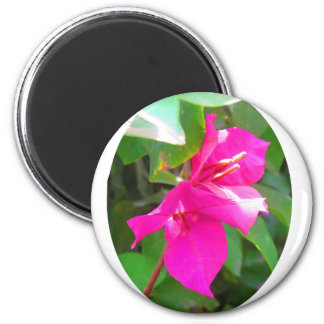 India travel flower bougainvillea floral emblem 6 cm round magnet