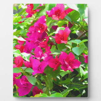India travel flower bougainvillea floral emblem plaque