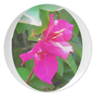 India travel flower bougainvillea floral emblem plates