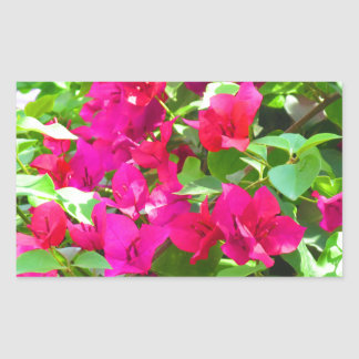 India travel flower bougainvillea floral emblem rectangular sticker