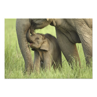 Indian / Asian Elephant and young one,Corbett 2 Photo