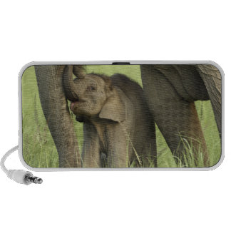 Indian / Asian Elephant and young one,Corbett 2 iPod Speakers