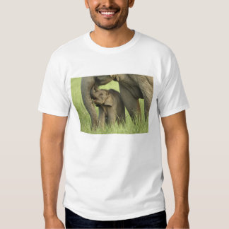 Indian / Asian Elephant and young one,Corbett 2 T Shirt