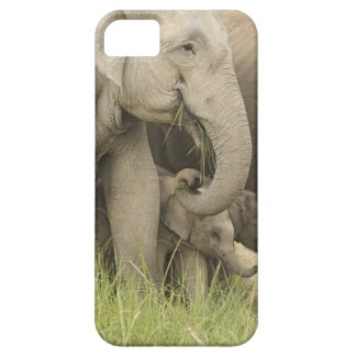 Indian / Asian Elephant and young one,Corbett 3 Case For The iPhone 5