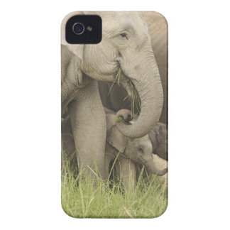 Indian / Asian Elephant and young one,Corbett 3 iPhone 4 Case