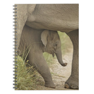 Indian / Asian Elephant and young one,Corbett Notebooks