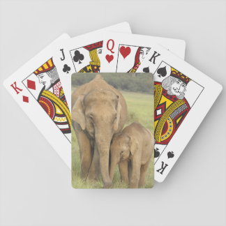 Indian / Asian Elephant and young one,Corbett Poker Deck