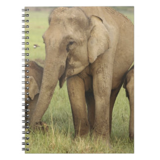 Indian / Asian Elephant and young ones,Corbett Spiral Note Books
