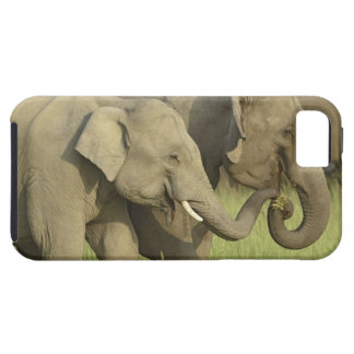 Indian / Asian Elephant asking for food;Corbett iPhone 5 Cases