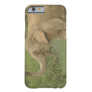 Indian / Asian Elephant communicating,Corbett 2 Barely There iPhone 6 Case