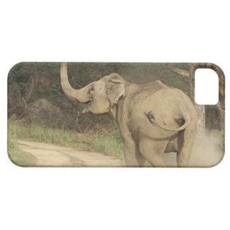 Indian / Asian Elephant communicating,Corbett iPhone 5 Covers