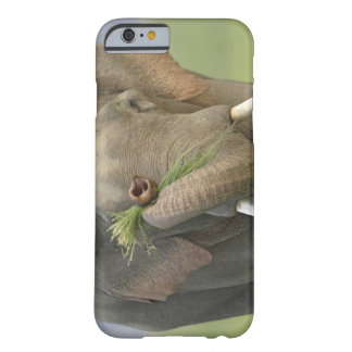 Indian / Asian Elephant displaying food,Corbett 2 Barely There iPhone 6 Case