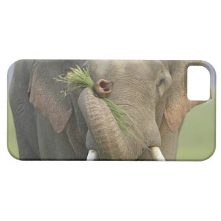 Indian / Asian Elephant displaying food,Corbett 2 iPhone 5 Cases