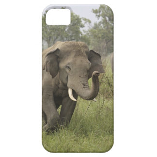 Indian / Asian Elephant greeting,Corbett Barely There iPhone 5 Case