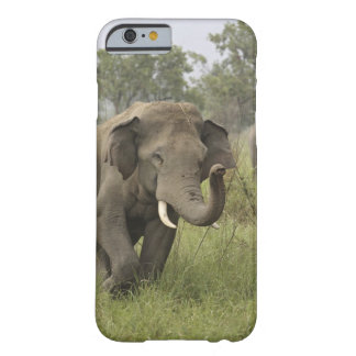 Indian / Asian Elephant greeting,Corbett Barely There iPhone 6 Case