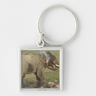 Indian / Asian Elephant spraying water,Corbett Silver-Colored Square Key Ring
