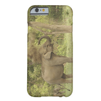 Indian / Asian Elephant taking dust bath,Corbett Barely There iPhone 6 Case