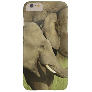 Indian / Asian Elephants sharing a Barely There iPhone 6 Plus Case