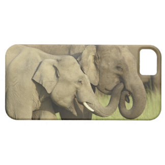 Indian / Asian Elephants sharing a iPhone 5 Case