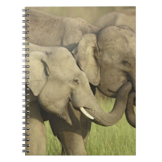 Indian / Asian Elephants sharing a Spiral Note Books