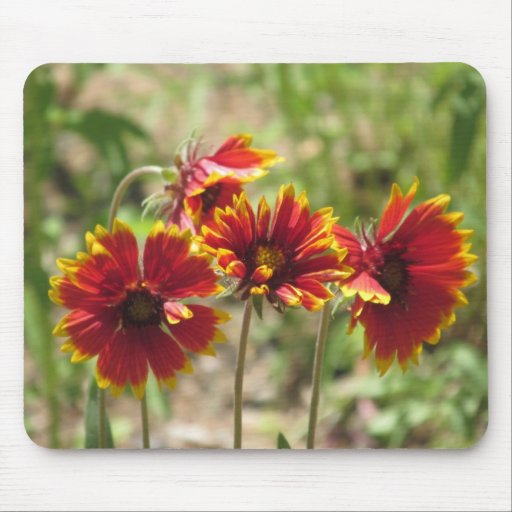 Indian Blanket Wildflowers Mouse Pads