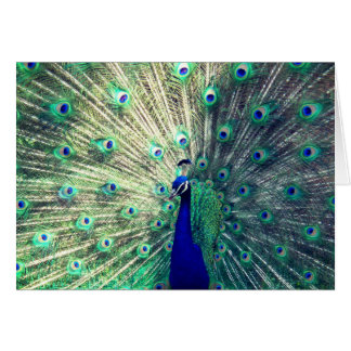Indian Blue Peacock Card