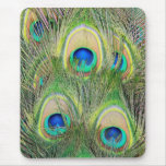Indian Blue Peacock Feathers Mousepad