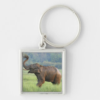Indian Elephant dust bathing,Corbett National Silver-Colored Square Key Ring