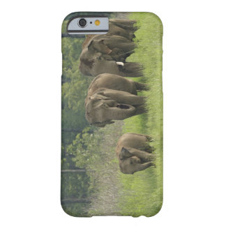 Indian Elephant family coming out of Barely There iPhone 6 Case