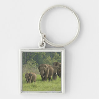Indian Elephant family coming out of Silver-Colored Square Key Ring