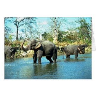 Indian Elephants mud bathing Card