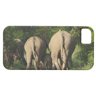 Indian Elephants on the jungle track,Corbett iPhone 5 Covers