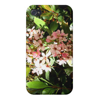 Indian Hawthorn iPhone 4 Covers
