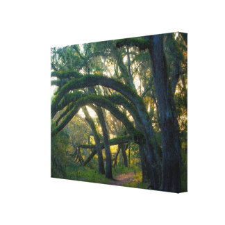 Indian Lake State Forest Canvas Print