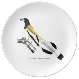 Indian Magpie Plate