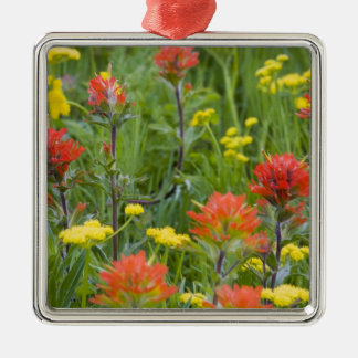 Indian paintbrush and biscuitroot wildflowers Silver-Colored square decoration