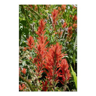Indian Paintbrush At Sierra Buttes, California Poster