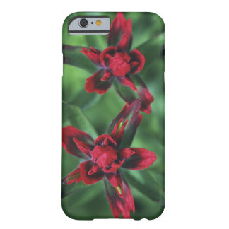Indian Paintbrush, Banff NP, Alberta, Canada 2 Barely There iPhone 6 Case
