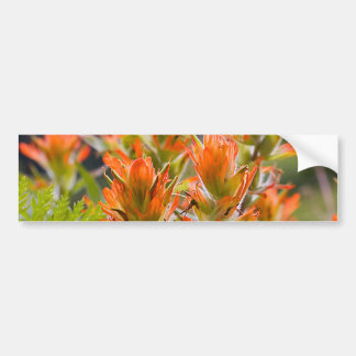 Indian Paintbrush Bumper Stickers