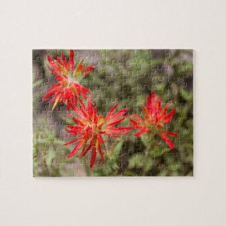 Indian Paintbrush Flowers Puzzle