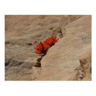 Indian Paintbrush in Rocks Postcard