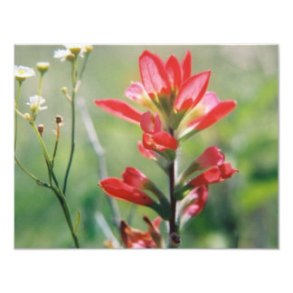 Indian Paintbrush Personalized Announcement