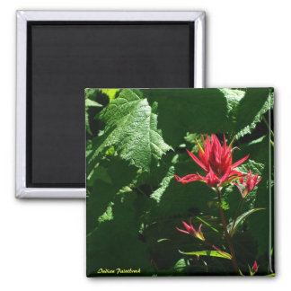 Indian Paintbrush Square Magnet