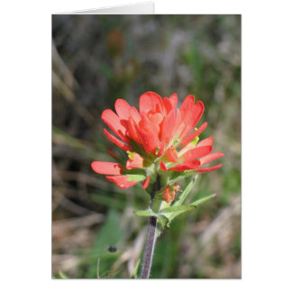 Indian Paintbrush Note Card