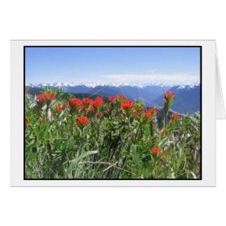 Indian Paintbrush, Olympic National Park Greeting Card