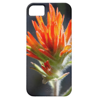 Indian Paintbrush Phone Case iPhone 5 Covers