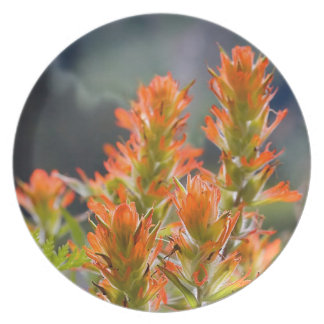 Indian Paintbrush Party Plate